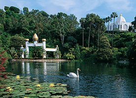 A swan swims in the peaceful pond at the Lake Shrine Temple in Pacific Palisades.